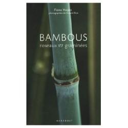 Bambous : Roseaux et graminées