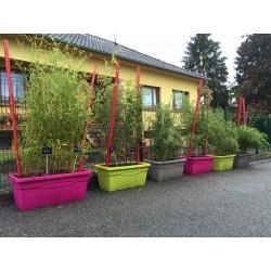 Jardinière prêt à poser avec bambous au choix