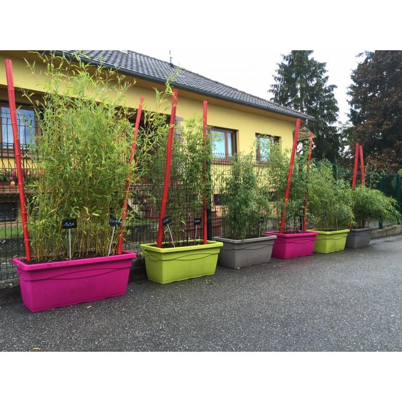 prêt à poser > Jardinière prêt à poser avec bambous au choix