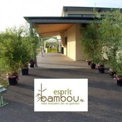 Bambou en location de 1 à 5 m