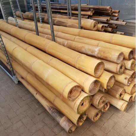 Tiges de bambous secs Betung (dendrocalamus asper)