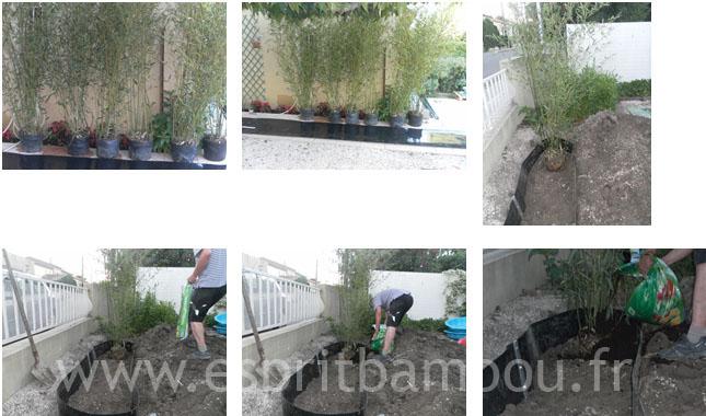 pose-plante_1.jpg